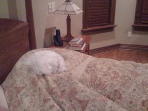 I become a tribble when I fall asleep!